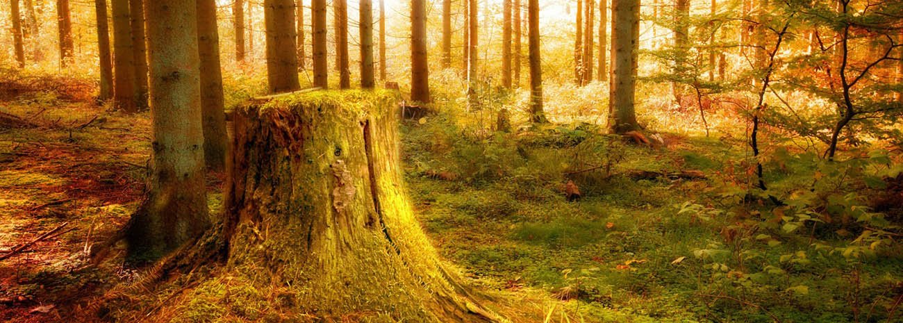 Kesilmiş Ağaç